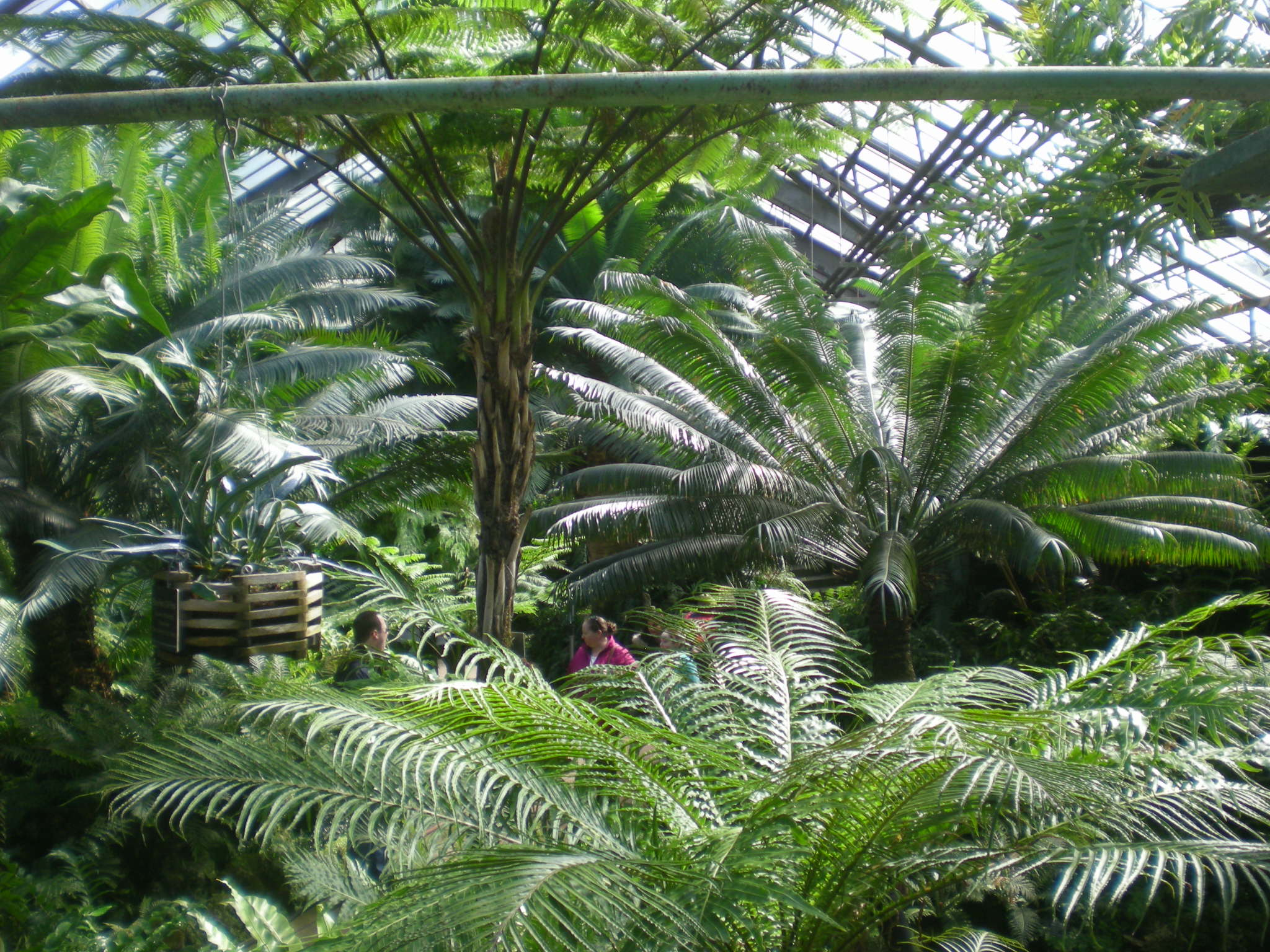 The Lincoln Park Conservatory | Been There, Seen That