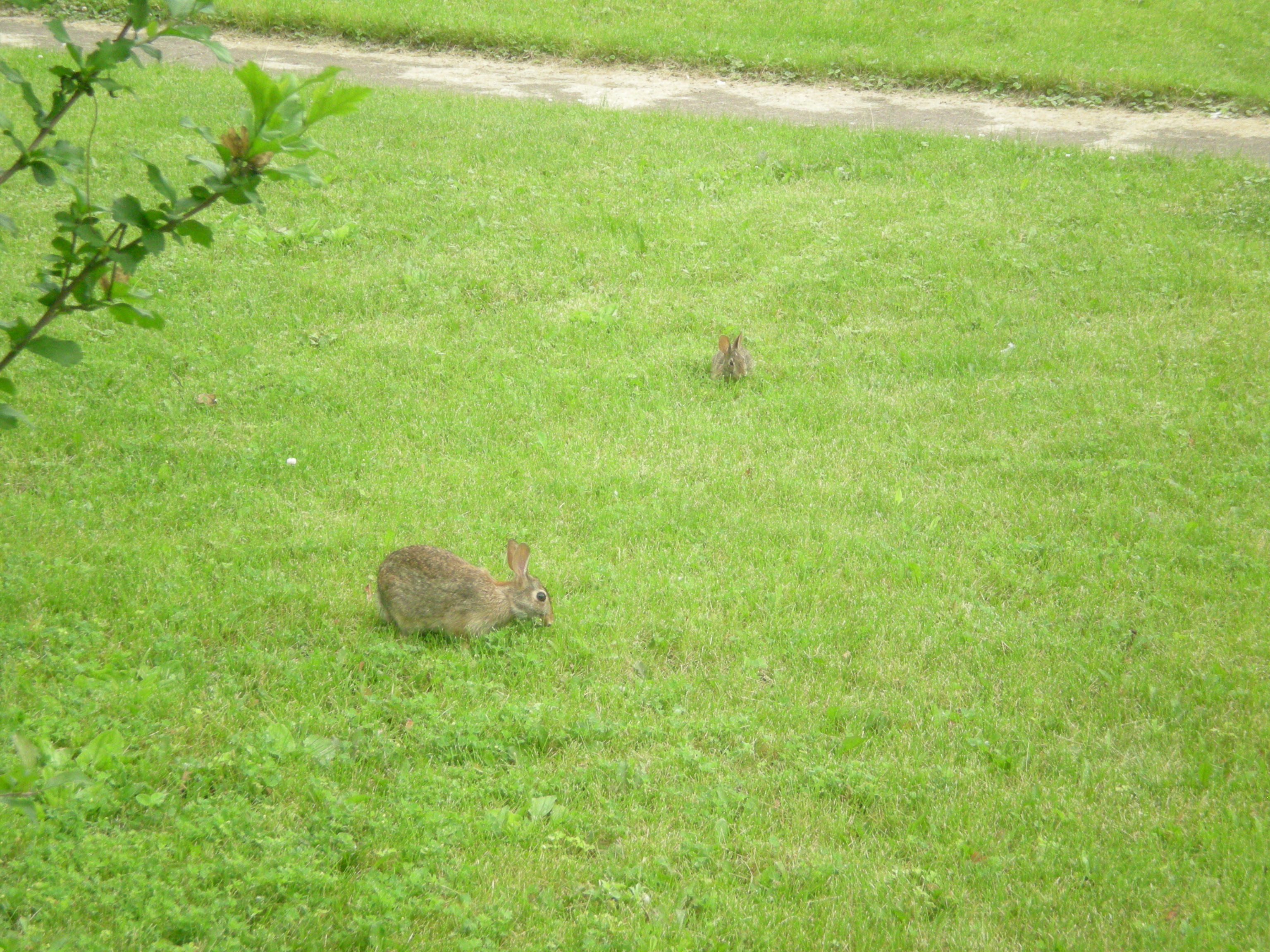 rabbits June 2015